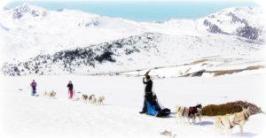 Initiation chiens de traineau Ariège