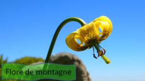 Randonnee - Flore de montagne Pyrenees