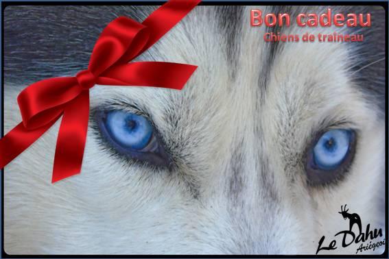 Bon cadeau chiens de traineau Ariège
