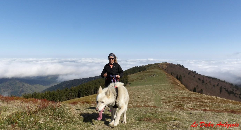 Cani trail Ariège