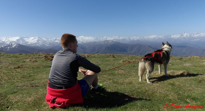 Cani trail Ariège - Husky Sibérien