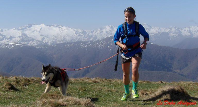 Cani trail Pyrénées - Husky Sibérien