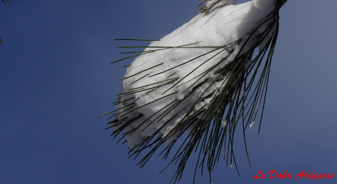 Raquettes a neige - Sapin Pyrénées