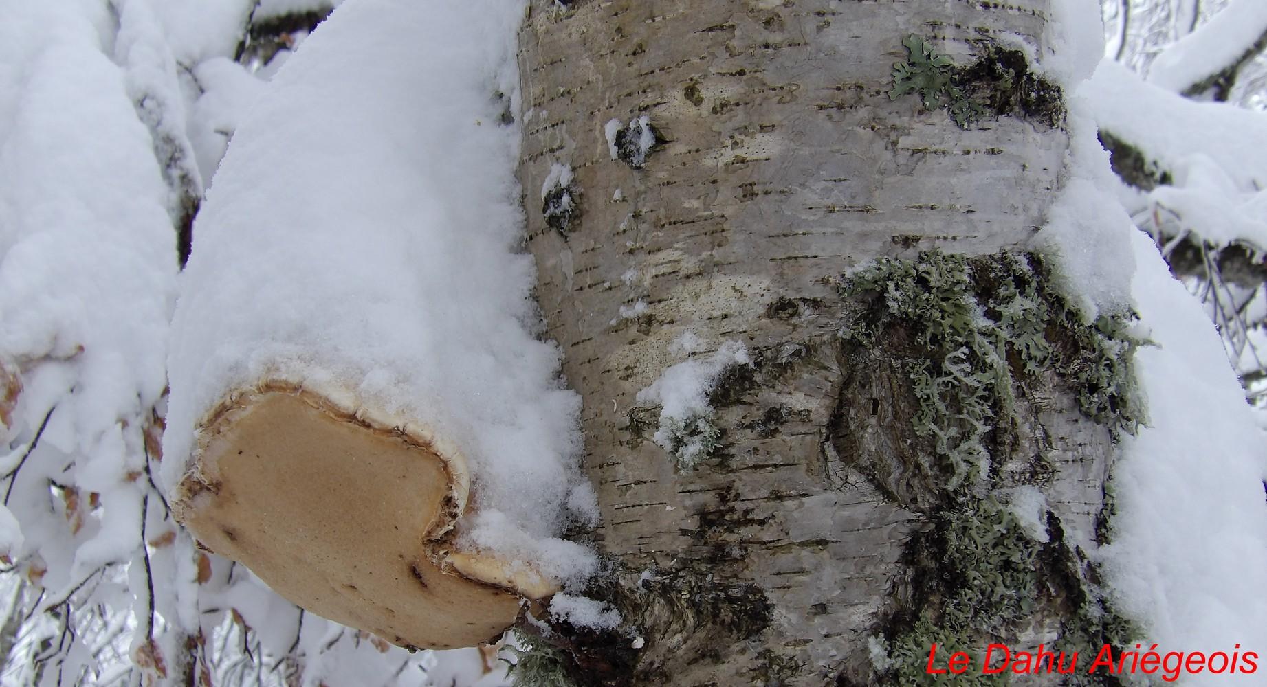 Raquettes a neige - Paysage Ariege 4