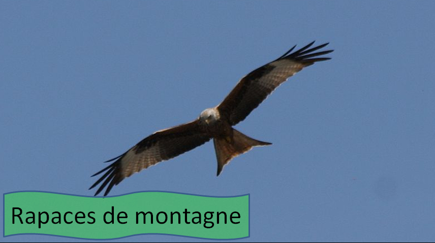 Rapaces de montagne Pyrénées