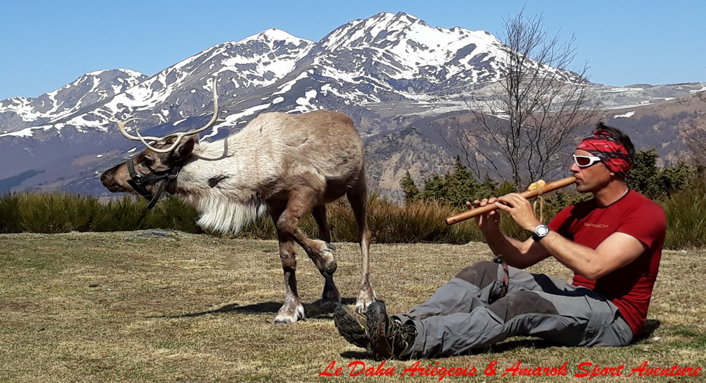 Renne Ariège Pyrénées