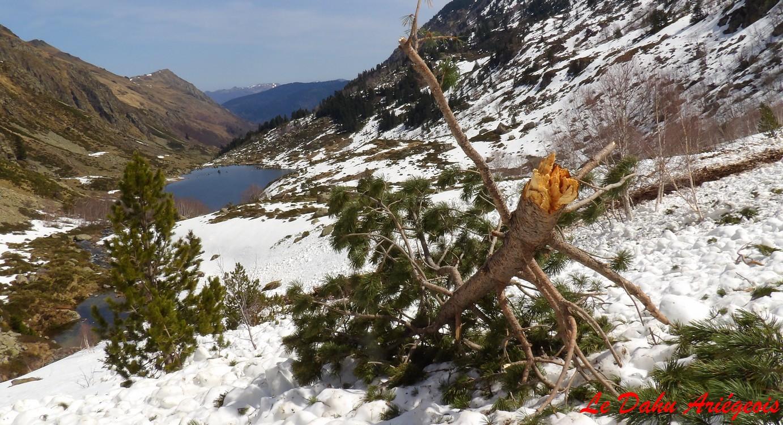 avalanche Pyrénées Ariège
