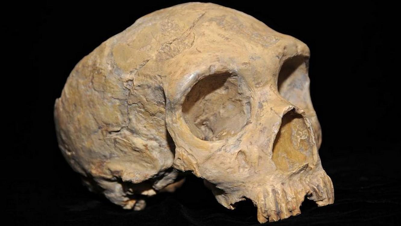 Crane Néandertal